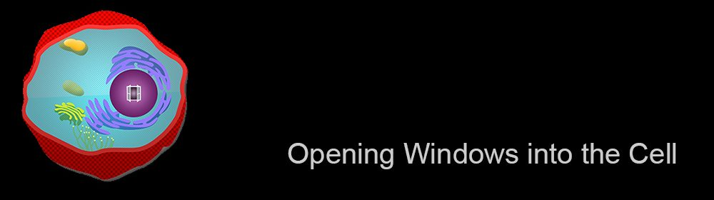opening-windows-banner